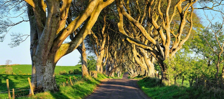 start_dark-hedges_11M1623