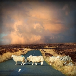 Irish-Traffic-Jam
