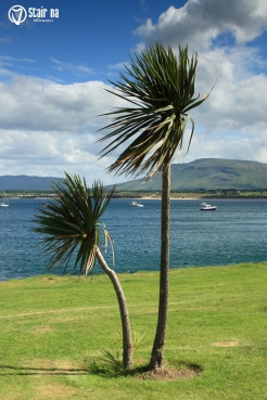 PalmTreesDonegal
