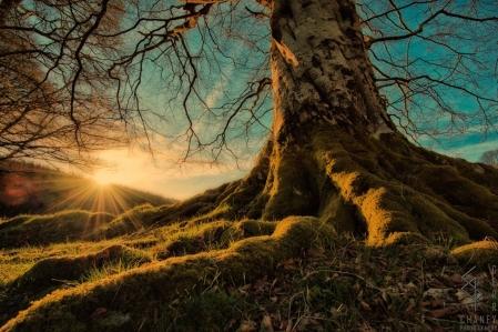 Image result for celtic mythology